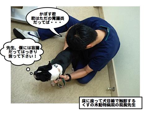 Kusunoki081126