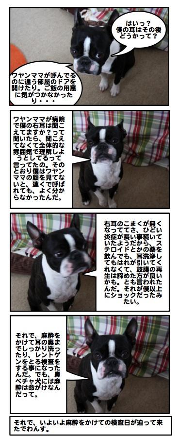 Kabosu090123
