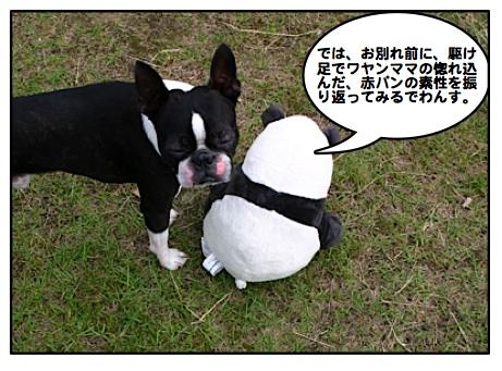 Kabosu090704